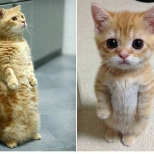 стоячие коты, смешные кошки фото