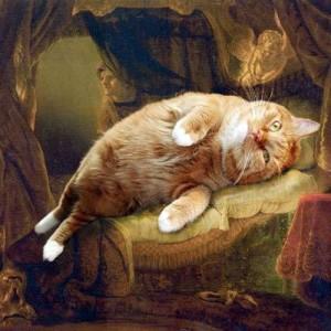 смешные кошки фото, просто добавь кота, коты