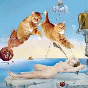 смешные кошки фото, просто добавь кота, коты фото