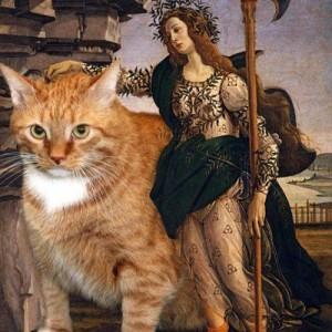 смешные кошки фото, просто добавь кота, фото коты