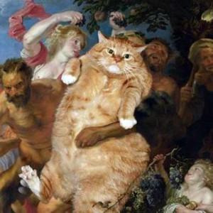 смешные кошки фото просто добавь кота, коты фото