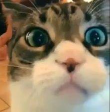 котаны, смешные кошки, смешное видео про кошек