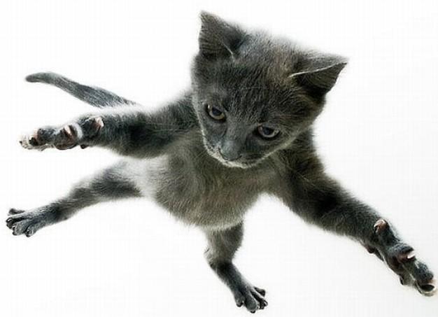9 жизней кошки, почему кошки такие живучие