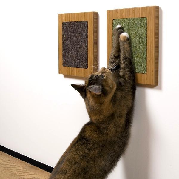 воспитание кошки, как отучить кошку от вредных привычек