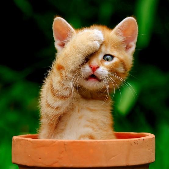 воспитание кошки, как воспитать кота, кошки