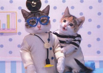 здоровье кошки, как узнать что кошка болеет, признаки заболевания у кошек
