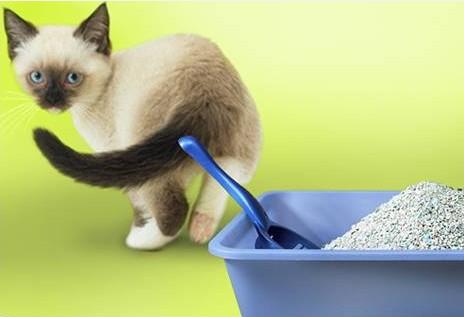 как отучить кошку гадить, кот гадит где попало