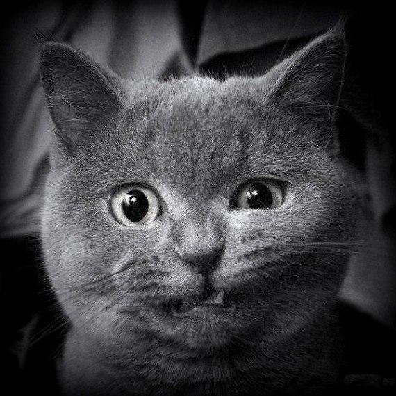 мой кот, смешные кошки, анекдоты про кошек