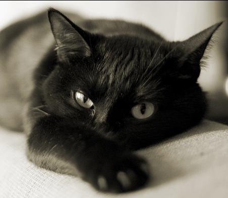 черная кошка, окрас кошек и характер