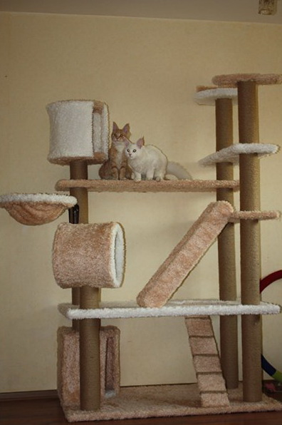 игры для кошек, кошачий полигон, игрушки для кошек, кошки