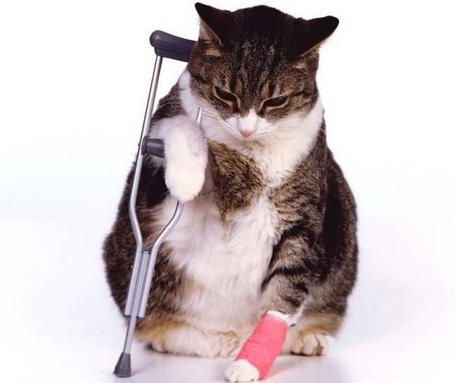 как понять что кошка болеет, признаки болезни у кота