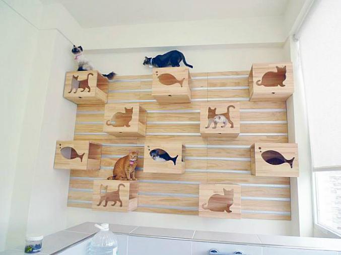 кошачий полигон, игры для кошек, игрушки для кошек своими руками