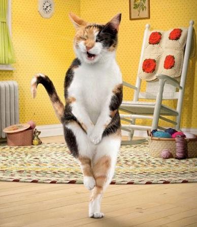 как отучить кошку гадить, как приучить кошку к лотку, что делать если кот гадит где попало