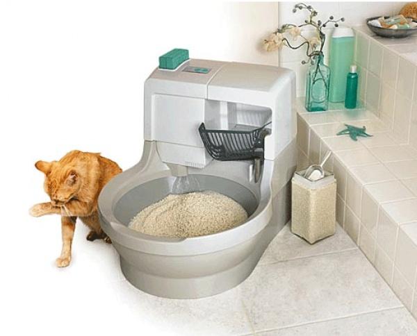биотуалет для кошки, как приучить котенка к лотку