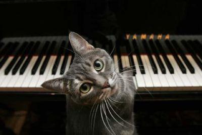 кошка нора играет на пианино видео, талантливые кошки, кошки видео
