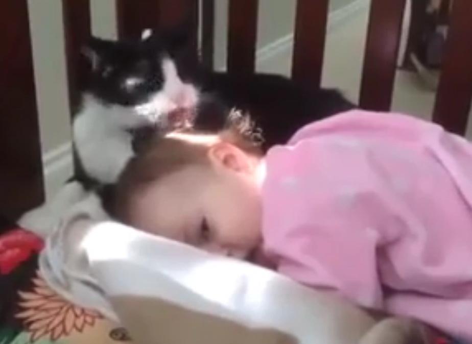кот умывает ребенка, видео кошки