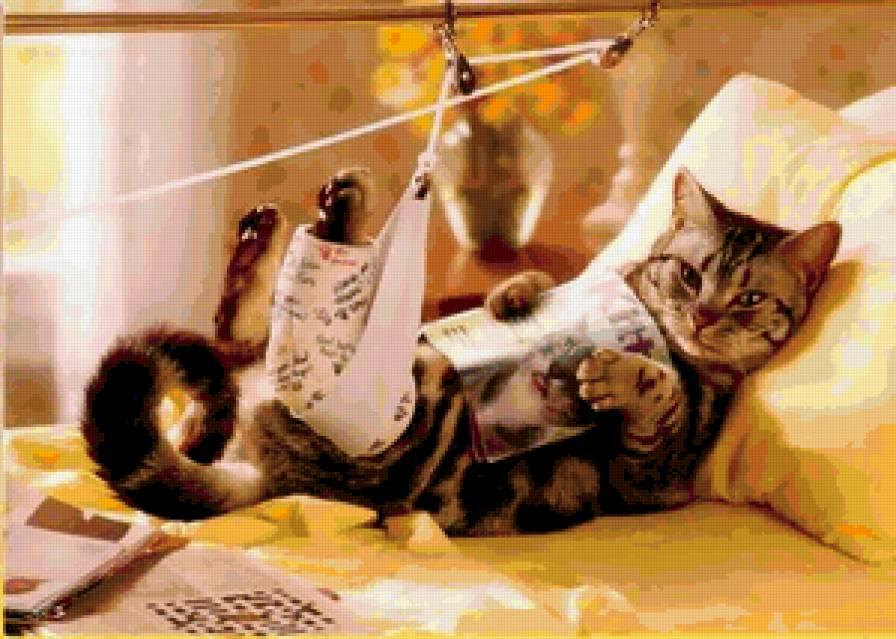 здоровье кошки, как узнать что кошка больна, симптомы болезни у кота