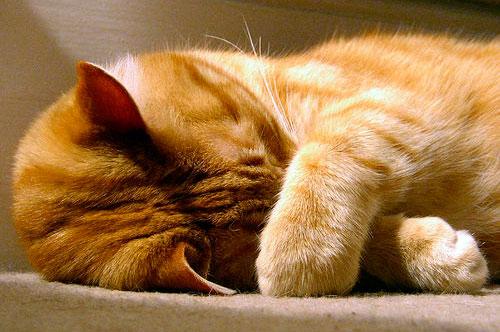 как измерить кошке температуру, кошка болеет