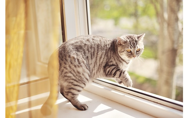 кошка в доме, безопасность кошки
