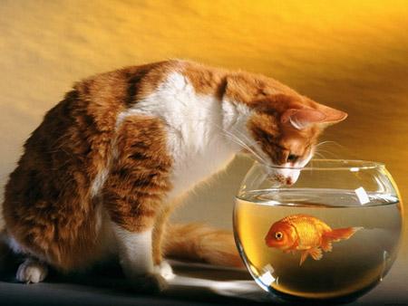 как отучить кошку от вредных привычек, воспитание кошки