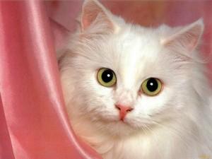 кошка, кошка фото, кот или кошка