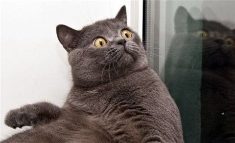 смешные кошки видео, кошки, котаны