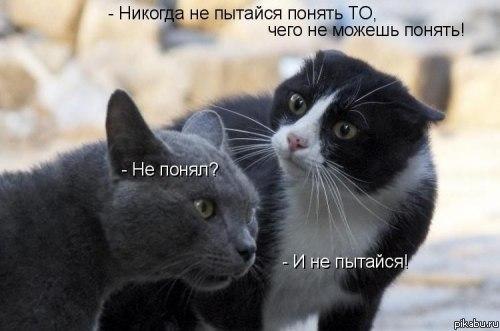 смешные кошки фото, котоматрица, кошка