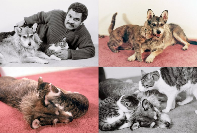 джинни спасительница кошек