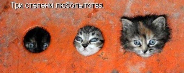 смешные кошки фото, котята фото