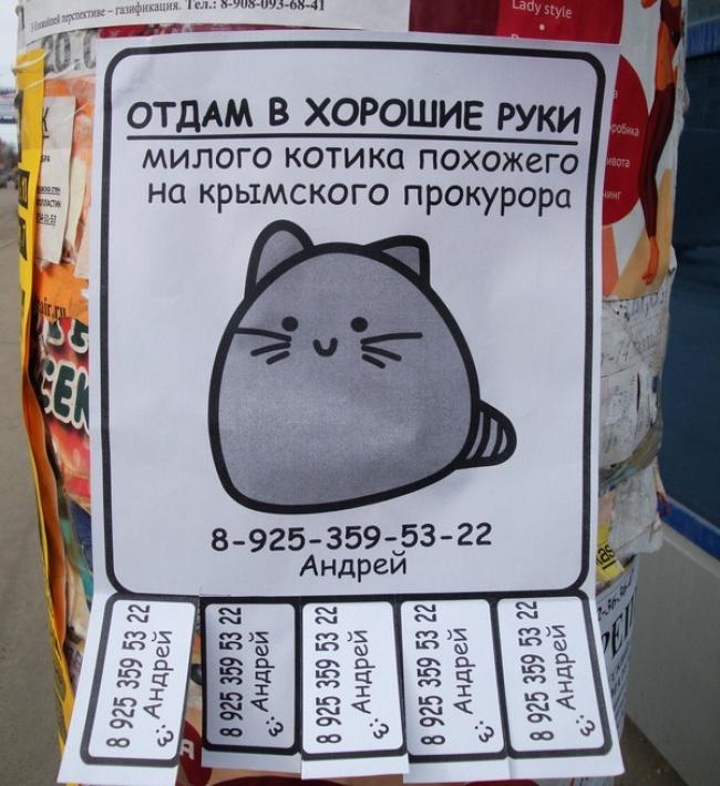 необычные объявления про кошек