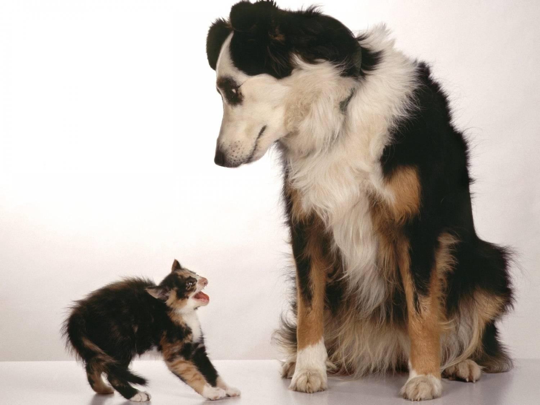 кошки против собак видео