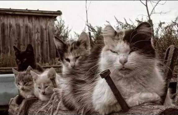 котаны, котаны фото