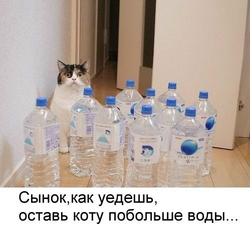 кот не пропадет, кот фото