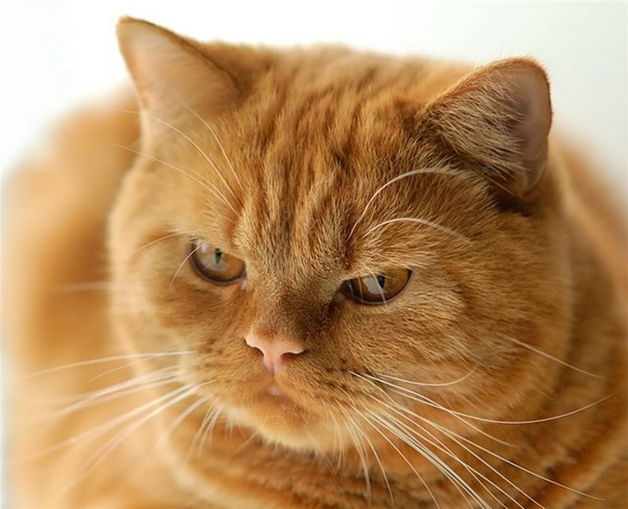 кот, мой кот, кот фото
