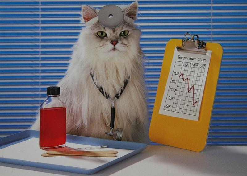 как кошки лечат людей, кошки-целители, кошка
