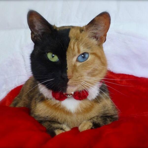 кошка с двумя лицами фото, необычные кошки