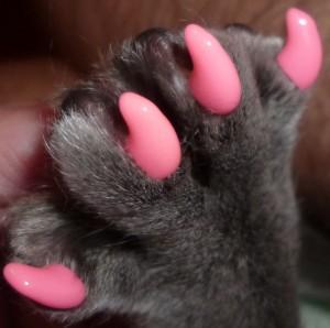 антицарапки для кошек, как отучить кошку драть мебель и обои