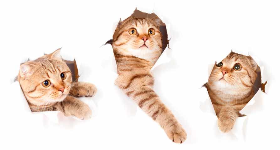 как отучить кошку драть обои, что делать если кошка дерет обои