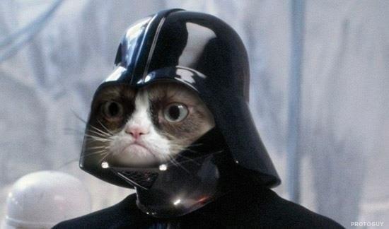 кот дарт вейдер фото, смешные коты