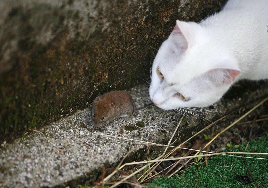 кошка играет с мышкой фото