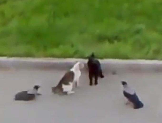 коты и вороны видео