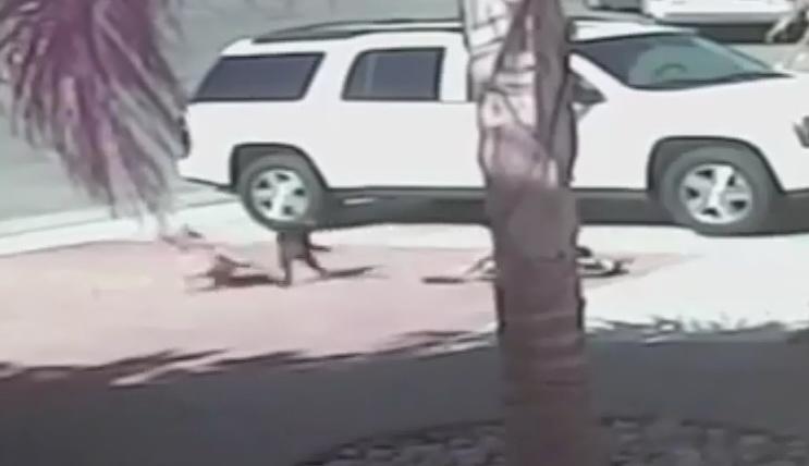 кот спасает мальчика от собаки, кошки видео