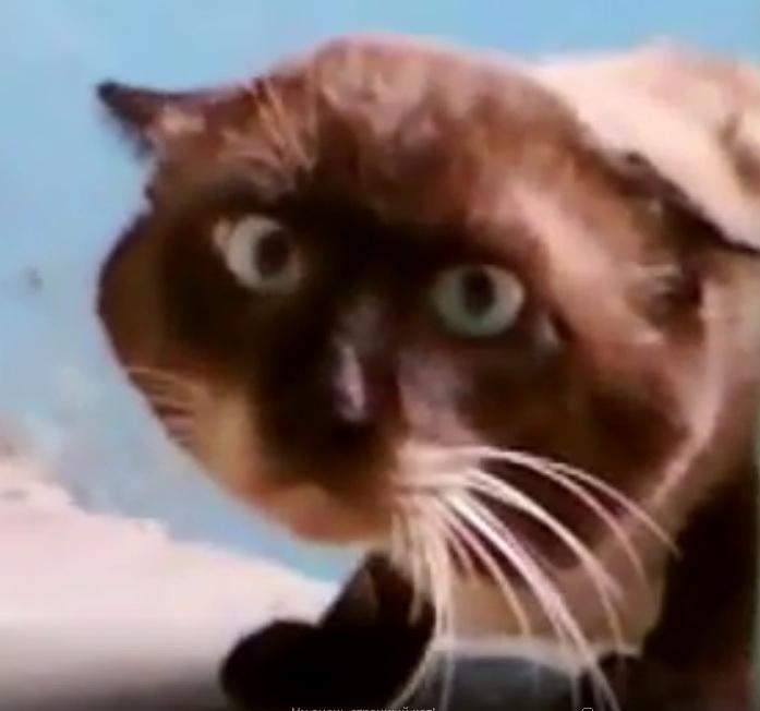 смешной кот видео, смешное видео про кошек, кот