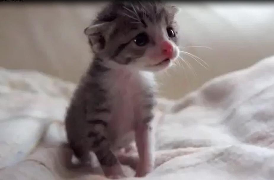 милый смешной котенок видео, котята