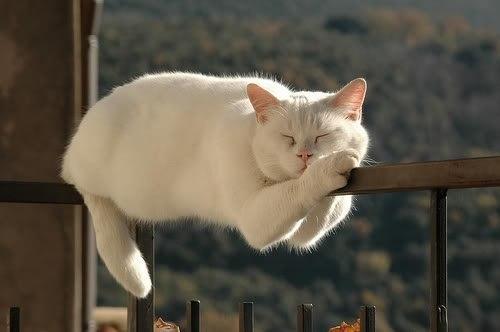 котаны, котэ, смешные кошки фото