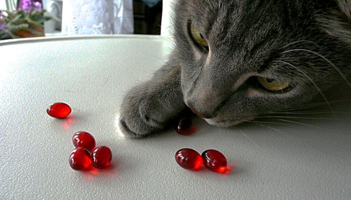 витамины для кошки, здоровье кошки