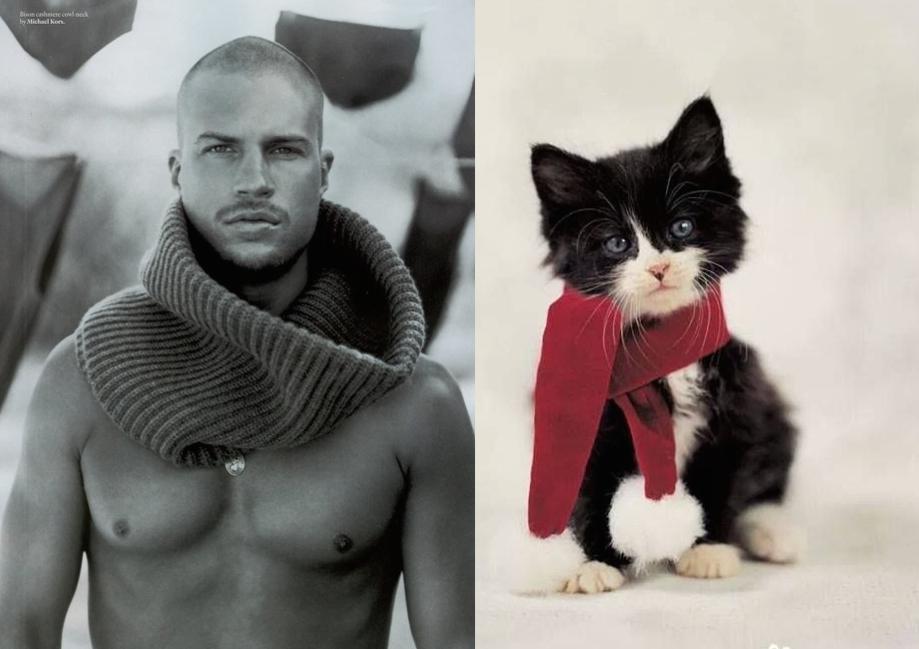 котята и мужчины