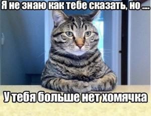 я не знаю как тебе это сказать, смешные кошки фото