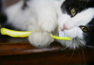 Как почистить зубы кошке или коту в домашних условиях
