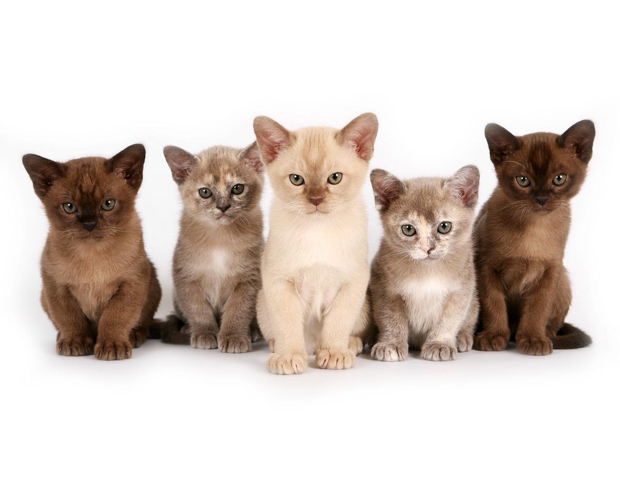 Сколько в мире существует пород кошек